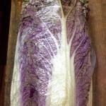 赤白菜 葉が柔らかく、生のままや、漬物がおすすめ。茹でると色素が落ちやすい