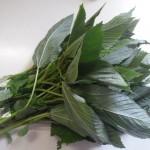 モロヘイヤ 王様の野菜、暑さで疲れた身体にビタミン補給