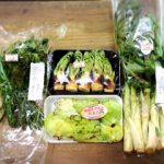 春の山菜達 こごみ、タラの芽、ふきのとう、山ウド 天ぷらや炒め物などにどうぞ!