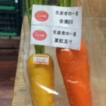 葉付人参(黄色=金美EX,オレンジ=夏紅五寸)