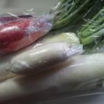 大根いろいろ おでんに漬物サラダに煮物、いっぱい食べて風邪知らず