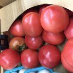 ぴかぴかトマト