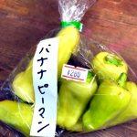 バナナピーマン ピーマンの仲間です。 ししとうや唐辛子に似た形で見た目がバナナに 似ているところからそう呼ばれています。